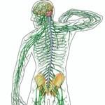 Гигиена нервной и костно-мышечной системы